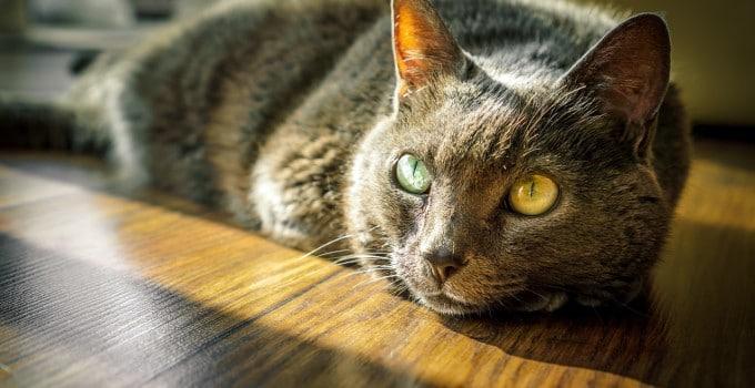Katzenurin entfernen Tipps