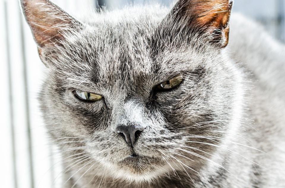 Katze pinkelt überall hin
