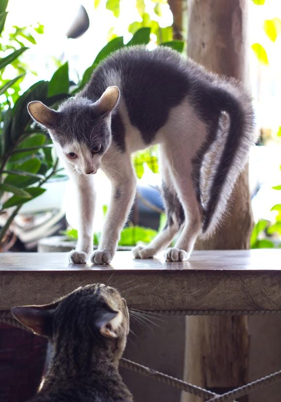 Aggressivität unter Katzen