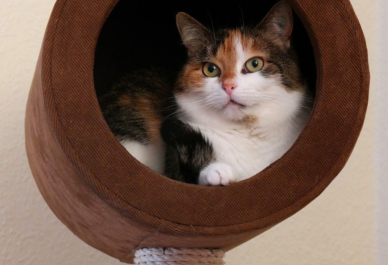Rückzugsort Katze