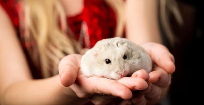 Hamster Eingewöhnung