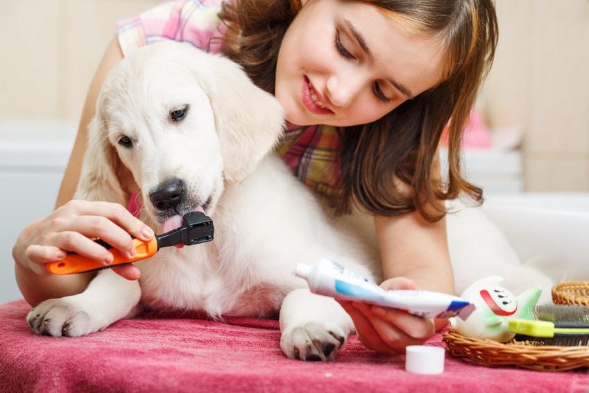Hund ans Zähneputzen gewöhnen