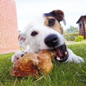 Kauwurzel Hund