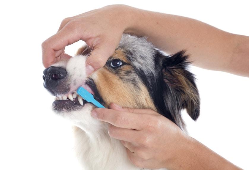 Zähneputzen beim Hund - Anleitung