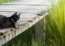 Katzen GPS und Peilsender